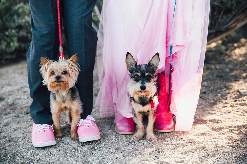 Buju + Willie Nelson sporting their Found My Animal Leashes / Joshua Tree Wedding