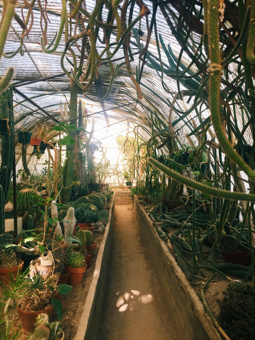 Inside the greenhouse / Moorten Botanical Garden, Palm Springs CA