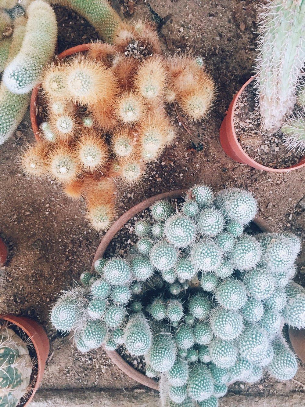 Cactus Garden / Moorten Botanical Garden, Palm Springs CA