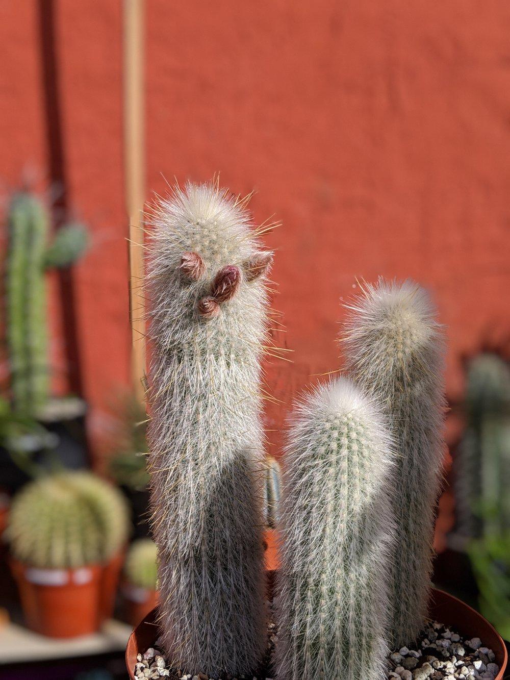Artemisia Nursery in Los Angele, taken in portrait mode.  Photos taken on Google Pixel 3