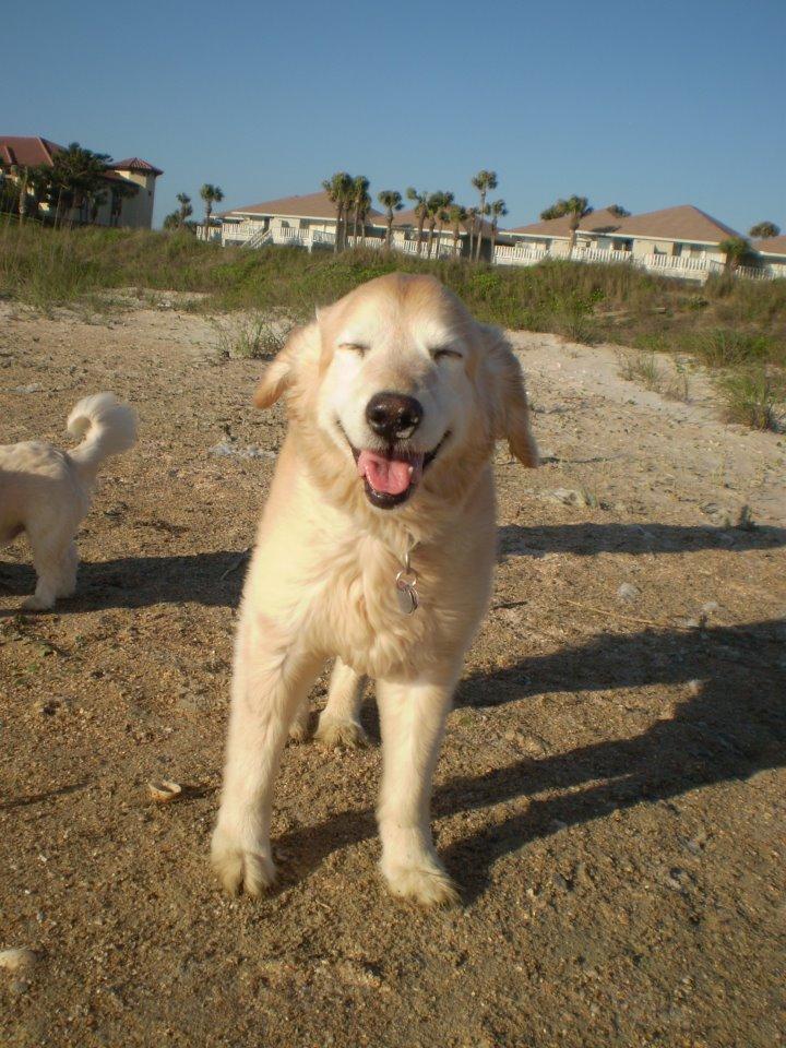 Prairie dog on beach.jpg