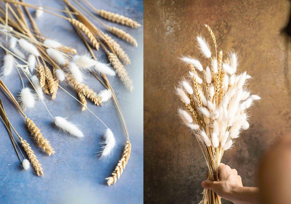 Montage wheat portfolio.jpg