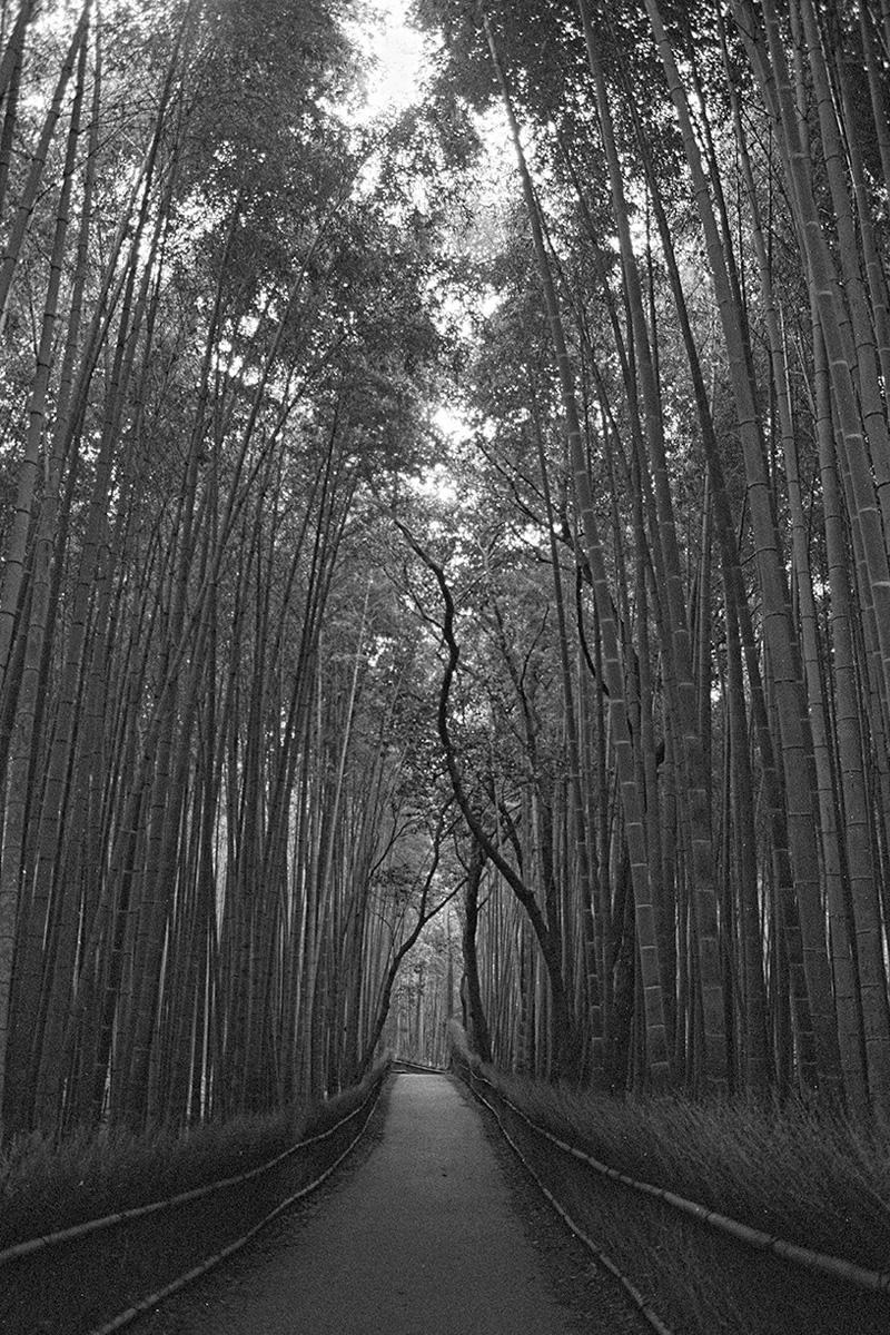 LiehSugai_Travel_Japan_05.jpg