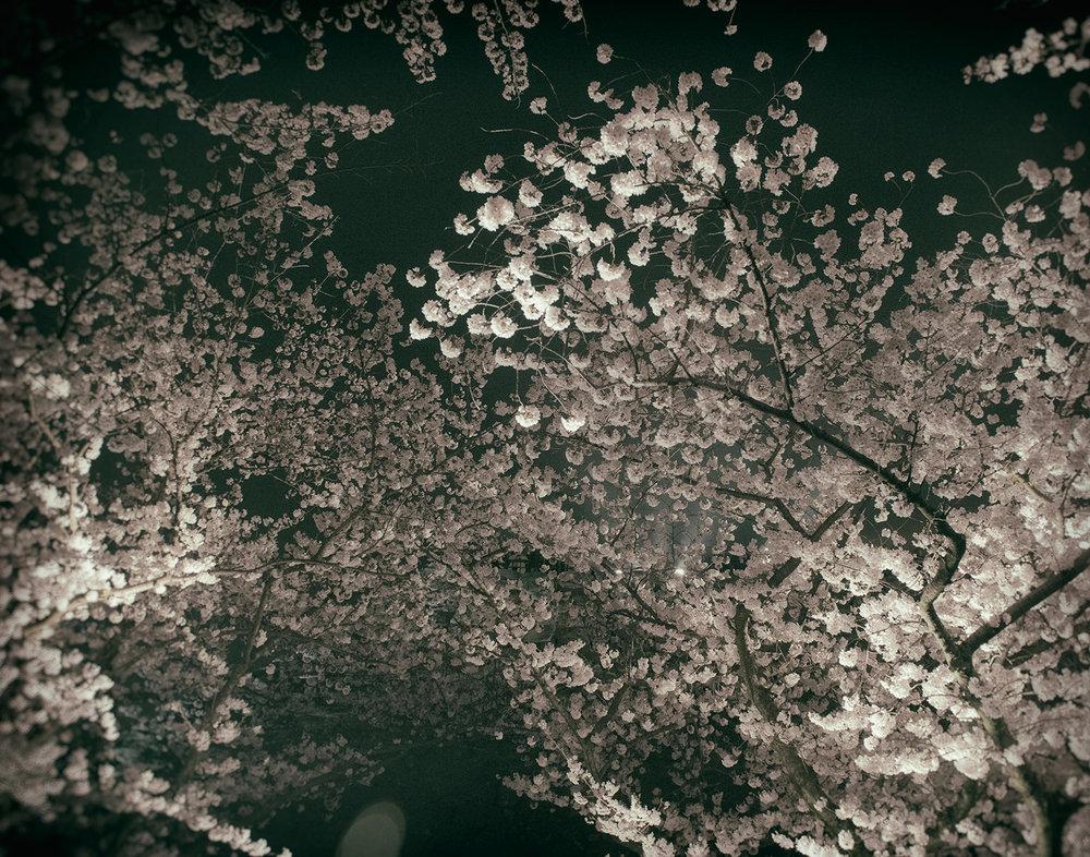 LiehSugai_IZUMO_07.jpg