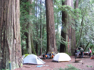 Our first night back in the redwoods