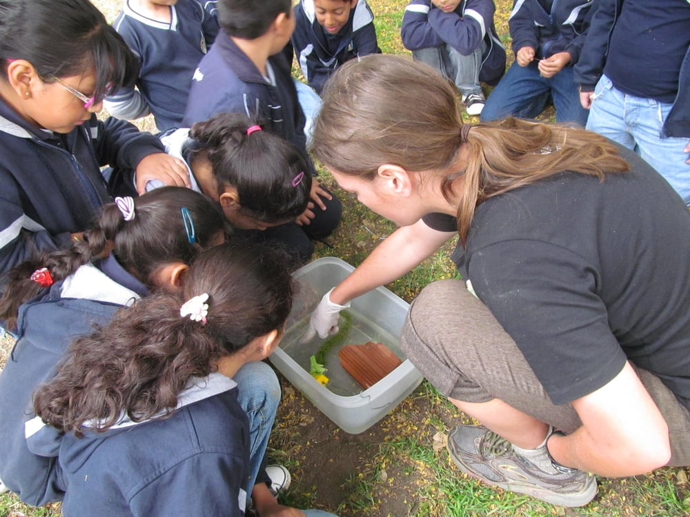I show a group of students visiting the museum several tadpoles. Luckly I don't need to say much when I can point and they can see tadpoles in real life.
