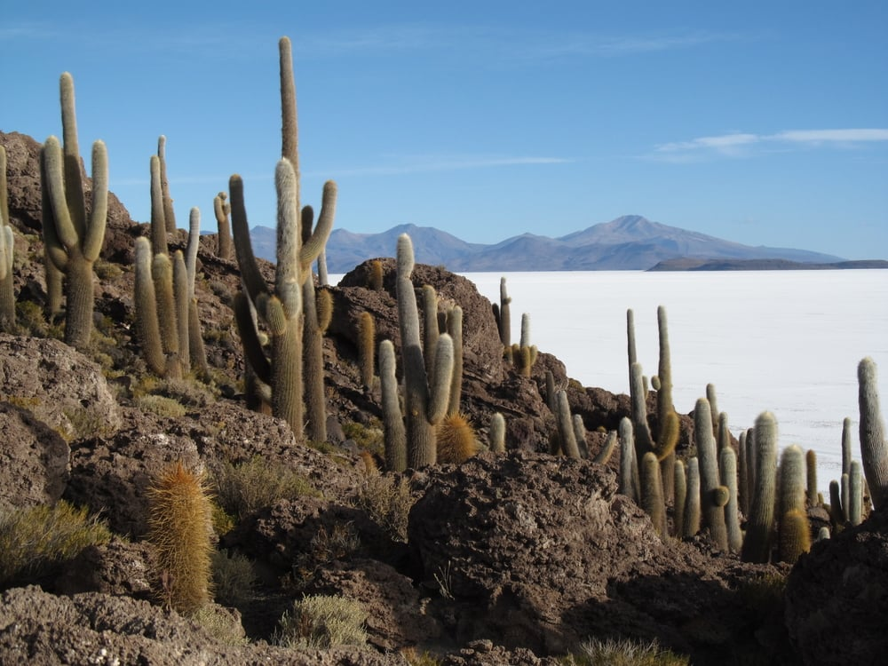 Cacti on Isla Incahuni.