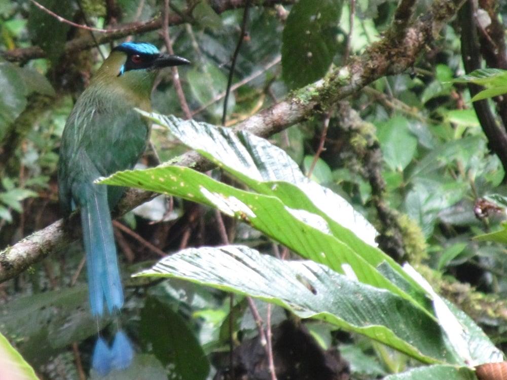 Por el cumpleanos de Nia caminamos en el parque nacional de Podocarpus. Encontramos mucha lluvia y algunos animales como este ave increíble.