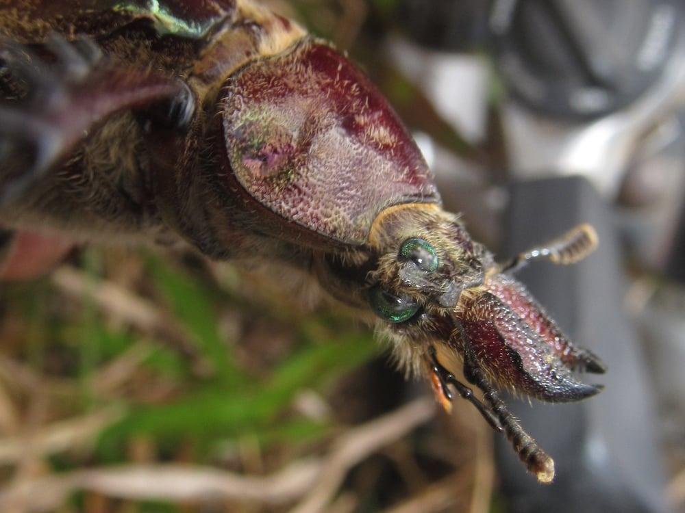 Este insecto tenia cuatro ojos. Que raro. Que increíble.