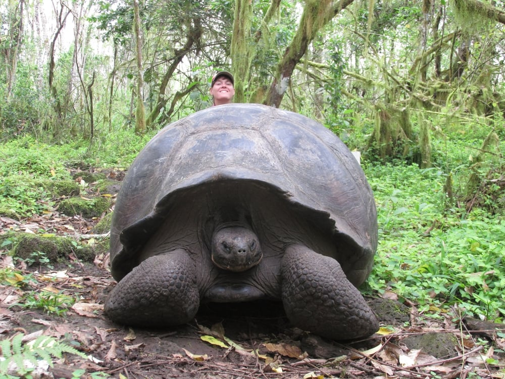 I hide behind the largest tortoise I have ever seen in my entire life. Being this big, it was very easy to find them.