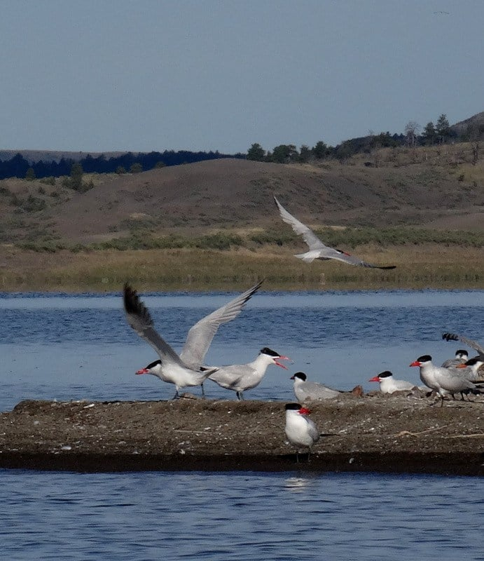 A tern colony chatters loudly as we paddle by.