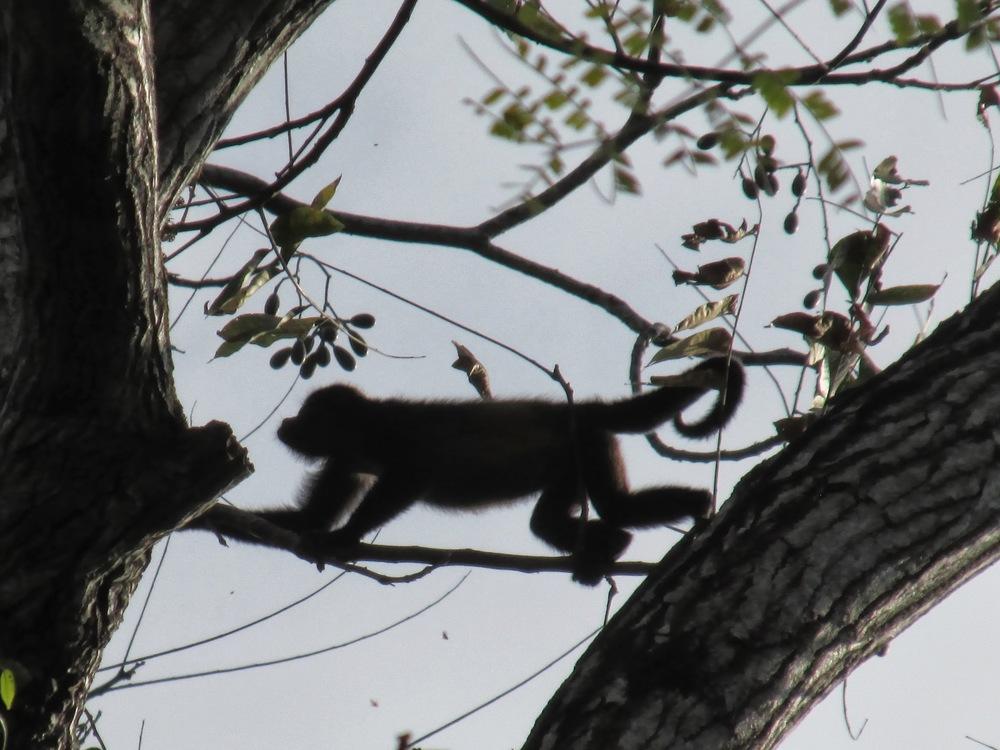 monkey sillouet.jpg