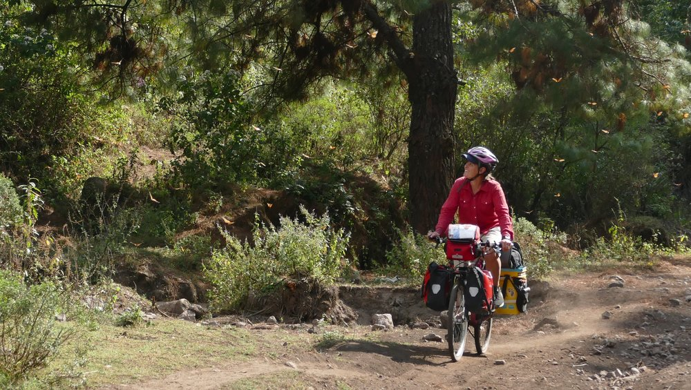 Dykman biking with monarch butterflies at the overwintering grounds in Michocan, Mexico.