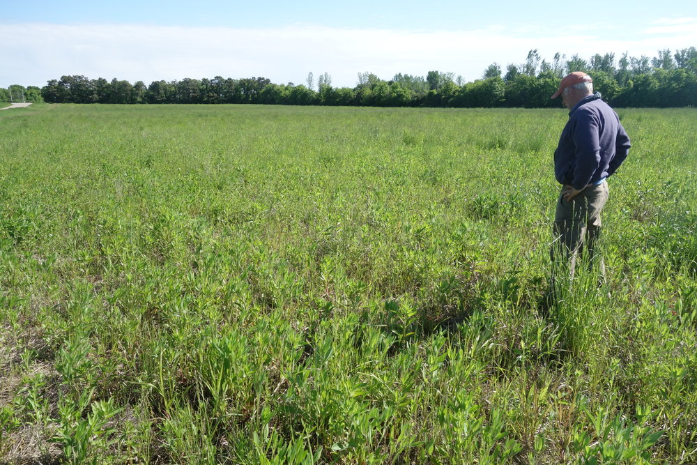 Tom, the owner of a seed company, gives me a tour of a recent native prairie planting. What he is really giving me is a tour of hope.