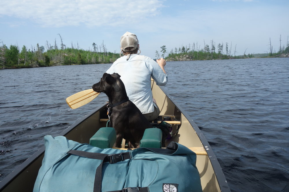 For three days I got to take a break from biking and do a bit of canoeing with Maddy and her puppy in the boundary waters.