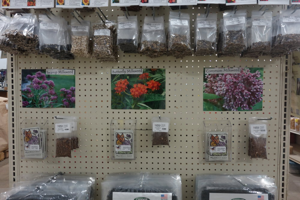 The universe gave me a second chance to meet Tom and visit his seed store where milkweed had its own shelf!