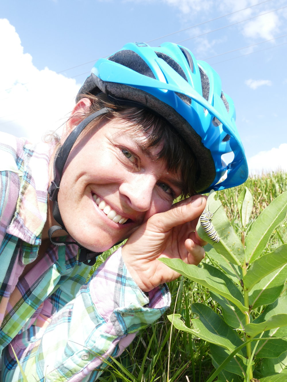 Dykman finds caterpillars along the roads she bikes, and she encourages folks to leave this roadside habitat alone and give the monarchs a chance.