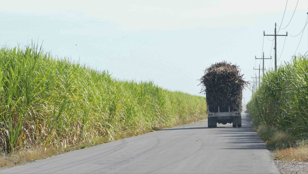 Luckily the trucks hauling all the sugar cane to the factory moved SLOWLY.