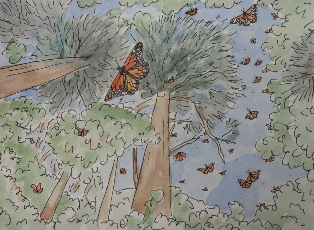 C. When the sun broke through the clouds and the canopy of tree branches, the monarchs leapt into flight and splashed orange against the green and blue above.