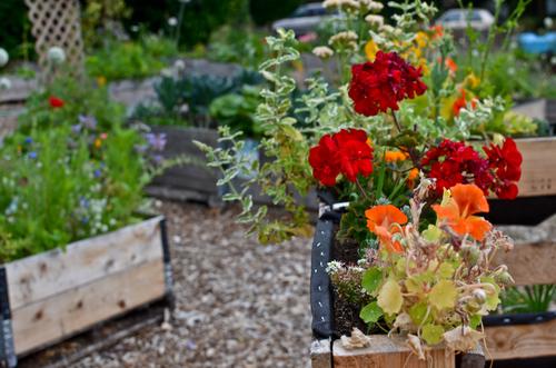 The Dunbar & 40th Temporary Community Garden — Shifting Growth\'s ...
