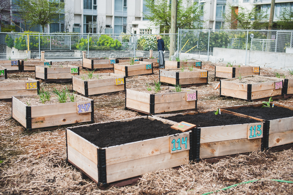 Shifting_Growth_Raised_Garden Beds_Community_Garden_Vancouver - South_False_Creek_Garden