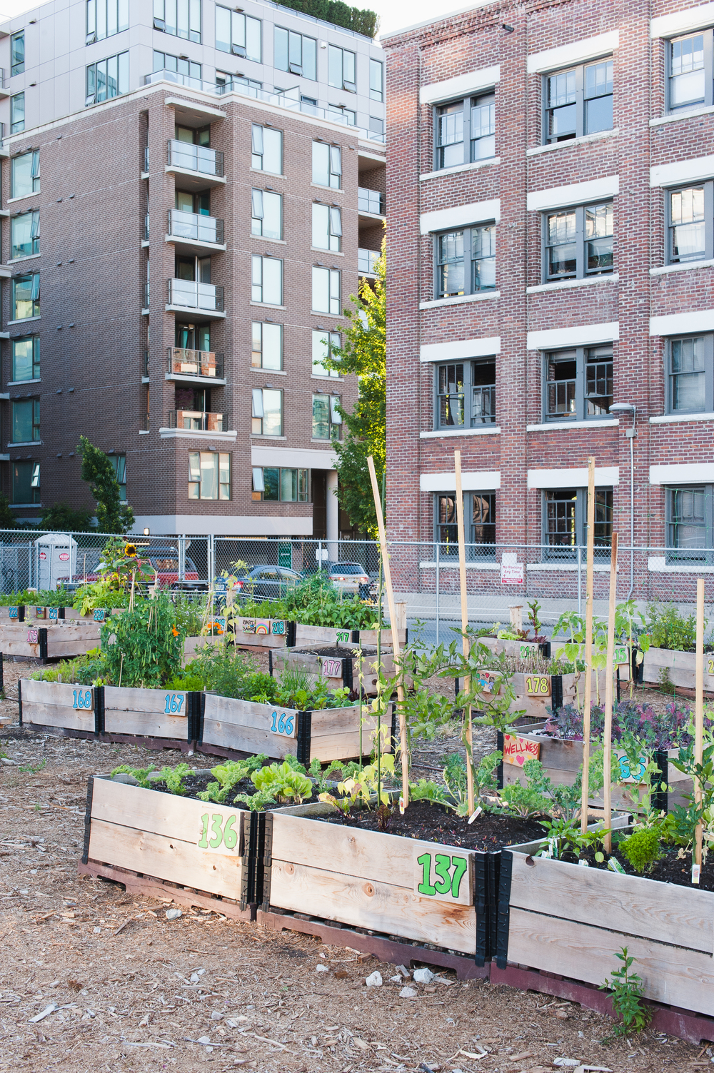 Southeast_False_Creek_Community_Garden_Raised-Beds_6-06.2015.jpg