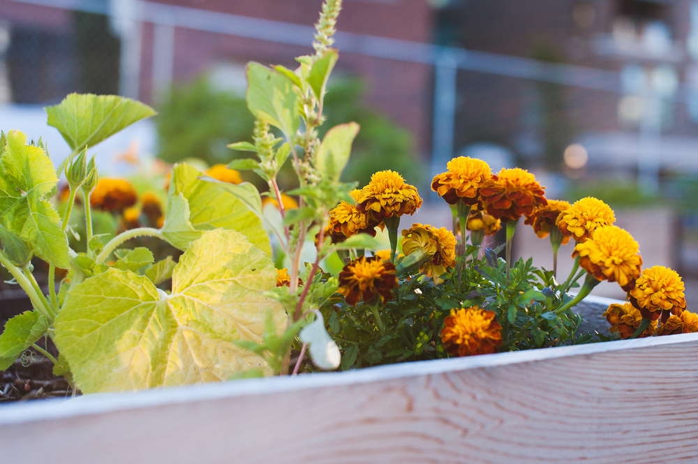 Southeast_False_Creek_Community_Garden_Raised-Beds_4-06.2015.jpg