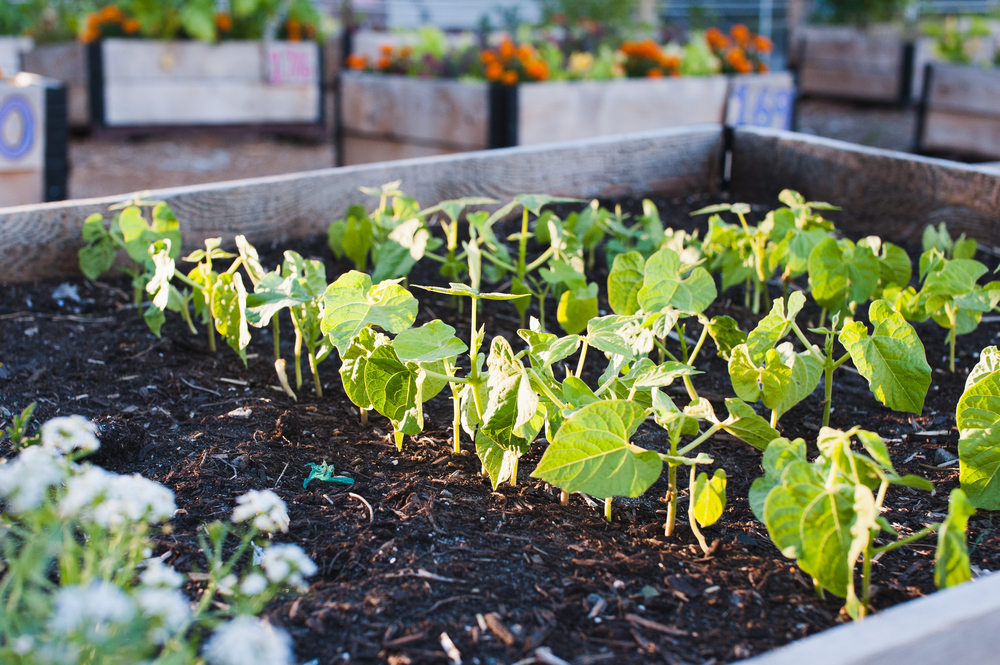 Southeast_False_Creek_Community_Garden_Raised-Beds_11-06.2015.jpg