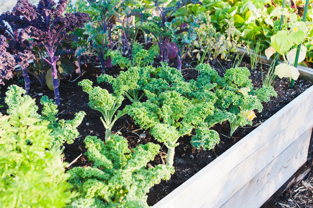 Southeast_False_Creek_Community_Garden_Raised-Beds_8-06.2015.jpg