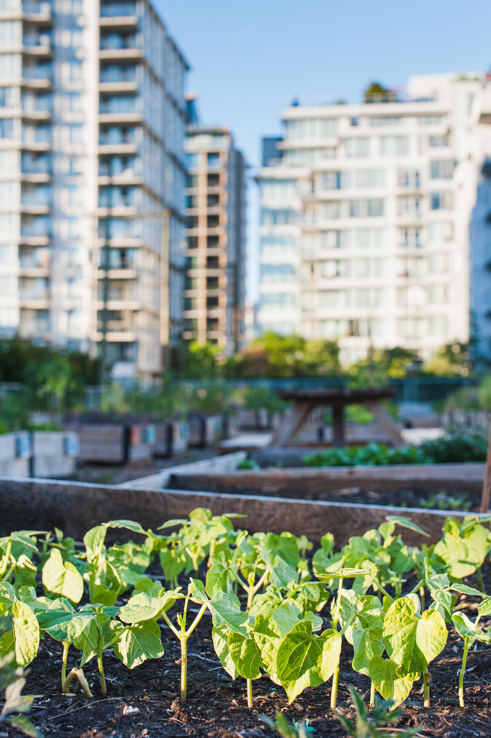 Southeast_False_Creek_Community_Garden_Raised-Beds_12-06.2015.jpg