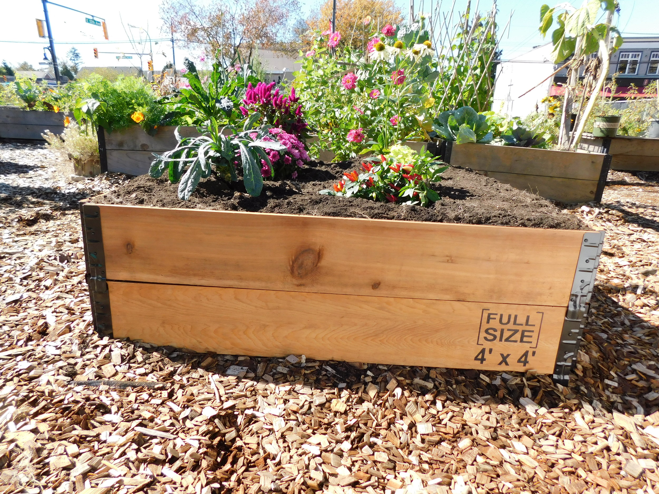 Shifting Growth 39 S Raised Gardens