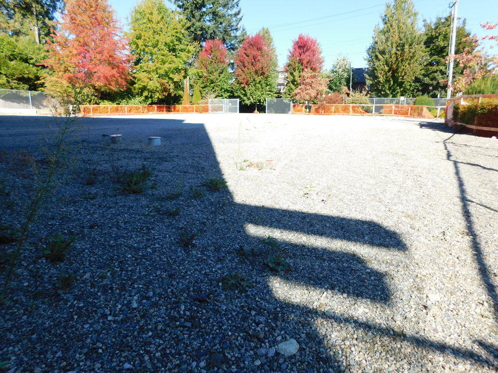 community_garden_vacant_grow_vancouver-0010.JPG