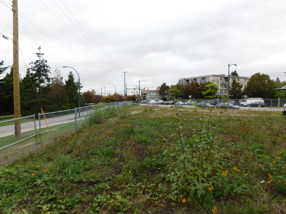 community_garden_vacant_grow_vancouver-0029.JPG