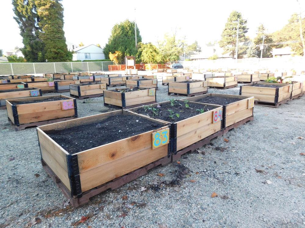 oak_41st_Vancouver_Community_Garden_Builders-0002.JPG