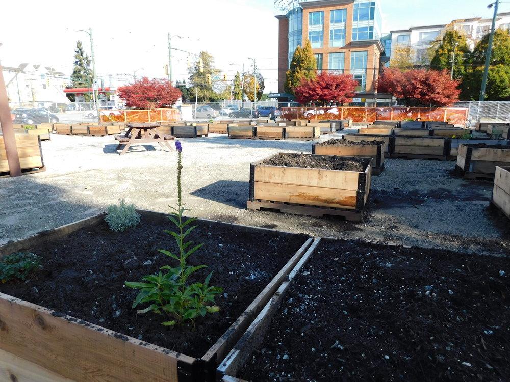 oak_41st_Vancouver_Community_Garden_Builders-0006.JPG