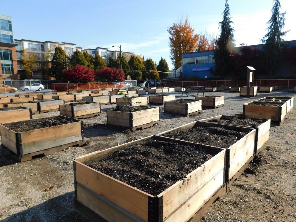 oak_41st_Vancouver_Community_Garden_Builders-0007.JPG