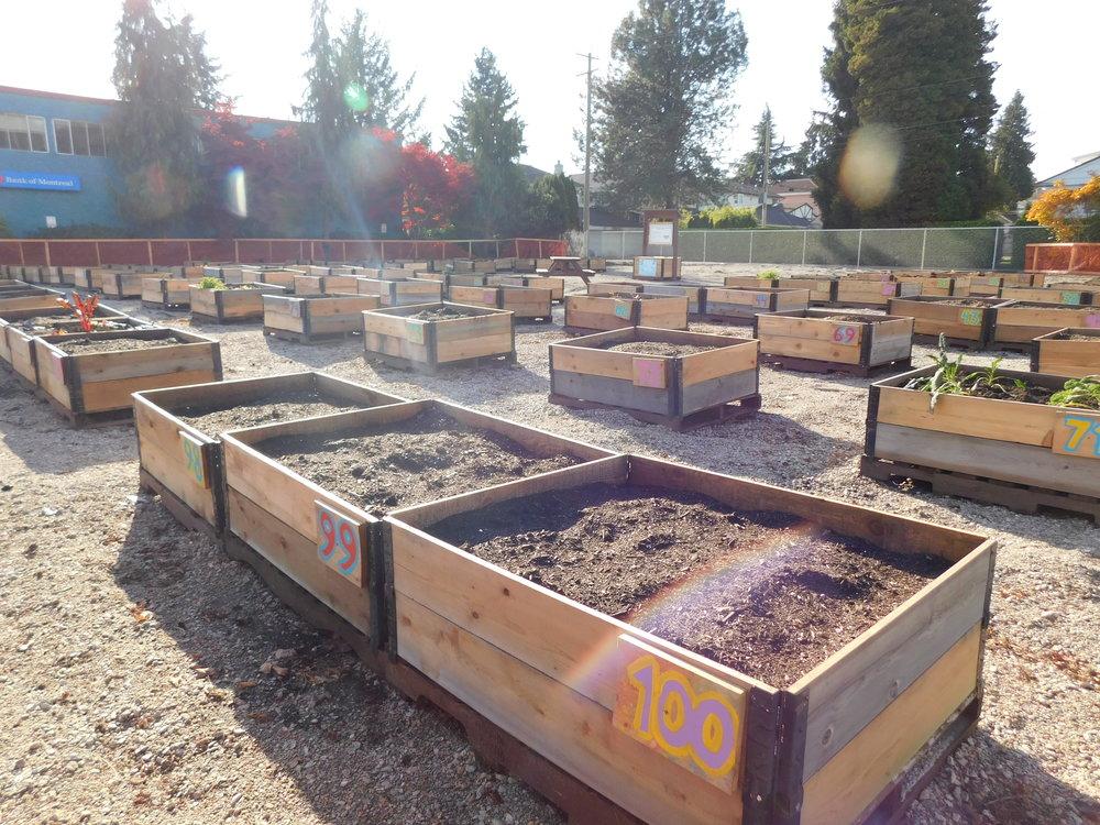 oak_41st_Vancouver_Community_Garden_Builders-0011.JPG
