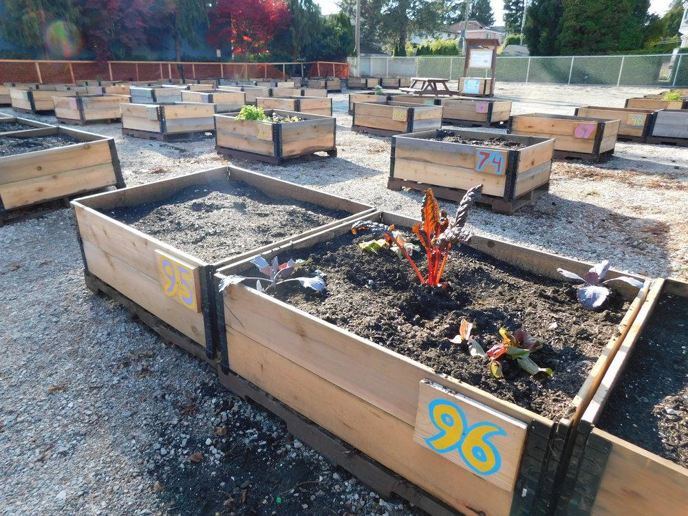 oak_41st_Vancouver_Community_Garden_Builders-0012.JPG