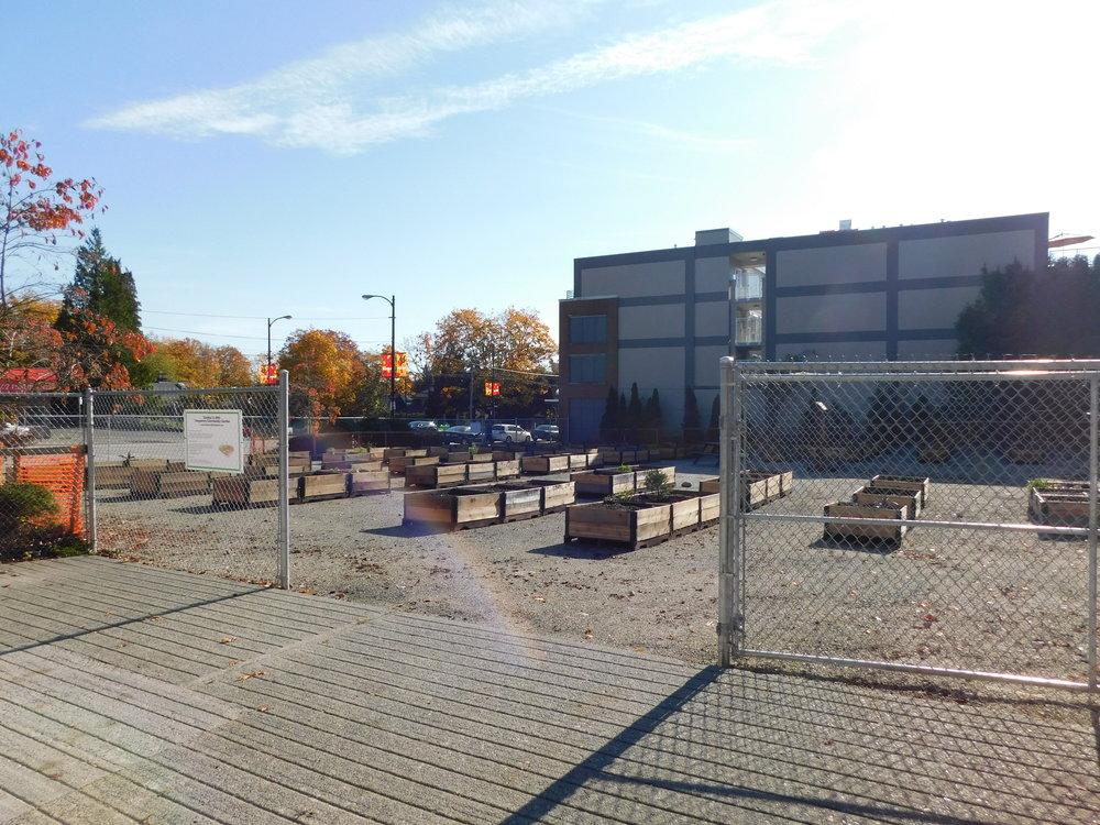 Dunbar_40th_Vancouver_Community_Garden_Builders-0001.JPG