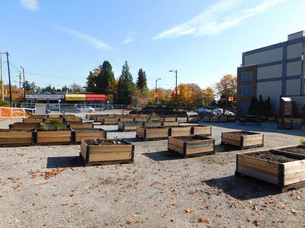 Dunbar_40th_Vancouver_Community_Garden_Builders-0003.JPG