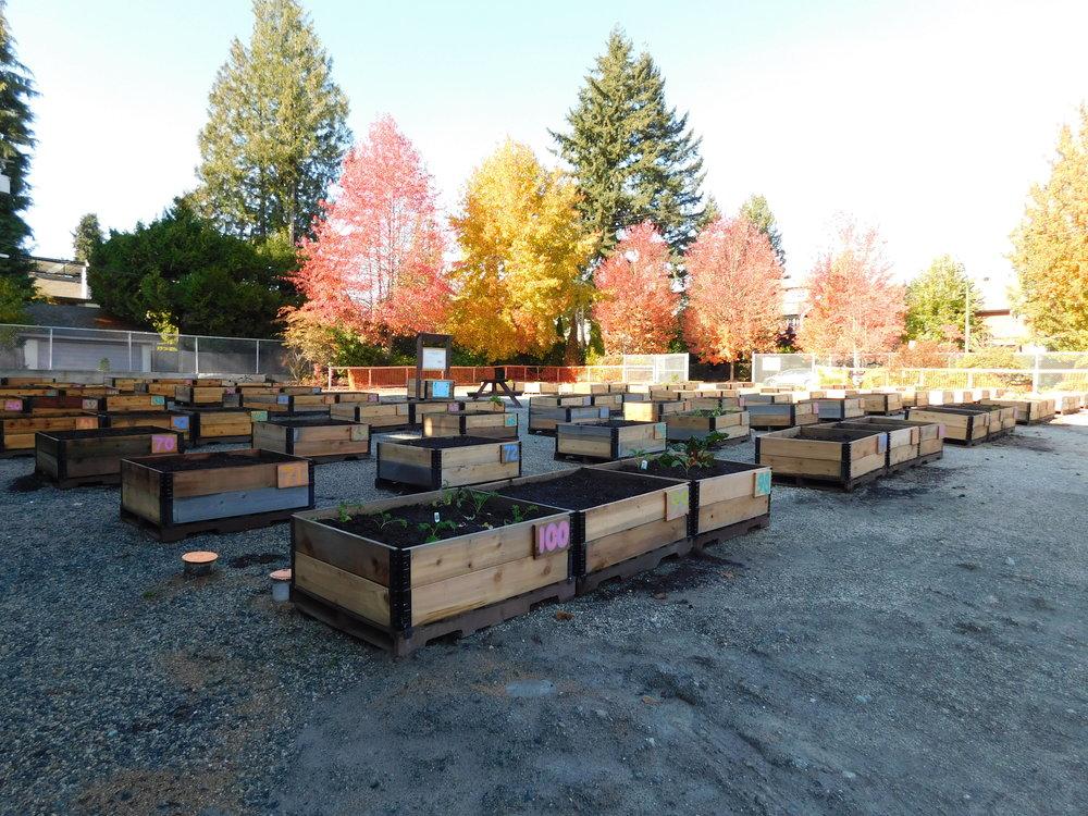 Dunbar_40th_Vancouver_Community_Garden_Builders-0007.JPG