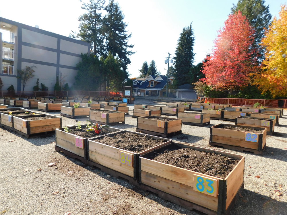 Dunbar_40th_Vancouver_Community_Garden_Builders-0011.JPG