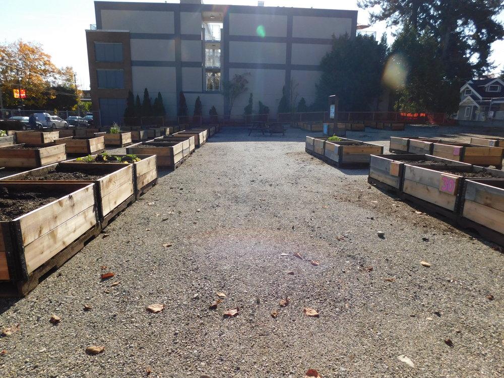 Dunbar_40th_Vancouver_Community_Garden_Builders-0013.JPG