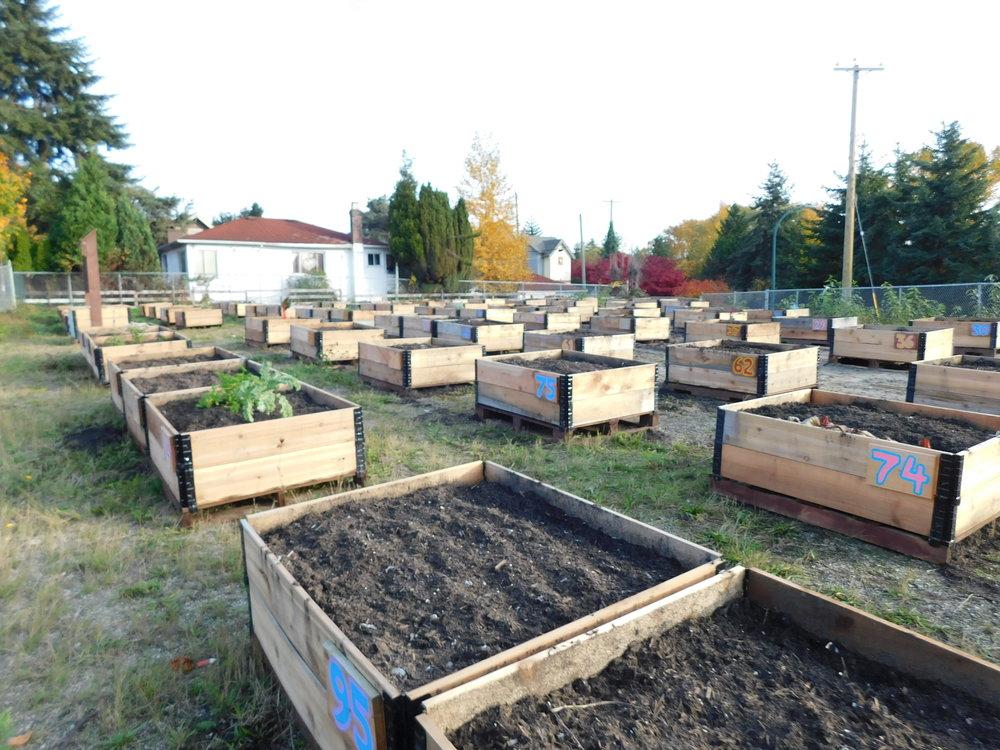 Victoria_Broadway_Vancouver_Community_Garden_Builders-0004.JPG