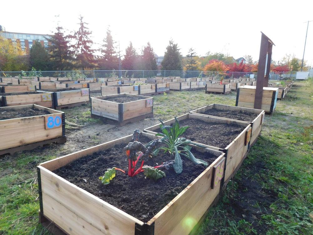 Victoria_Broadway_Vancouver_Community_Garden_Builders-0007.JPG