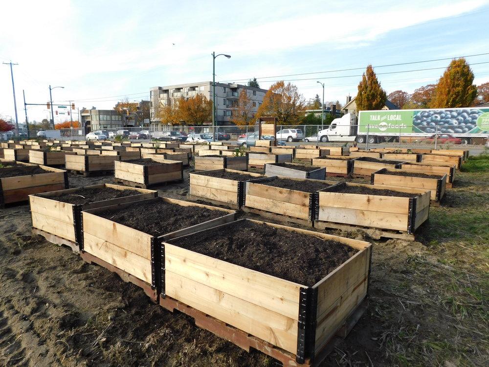 Victoria_Broadway_Vancouver_Community_Garden_Builders-0008.JPG