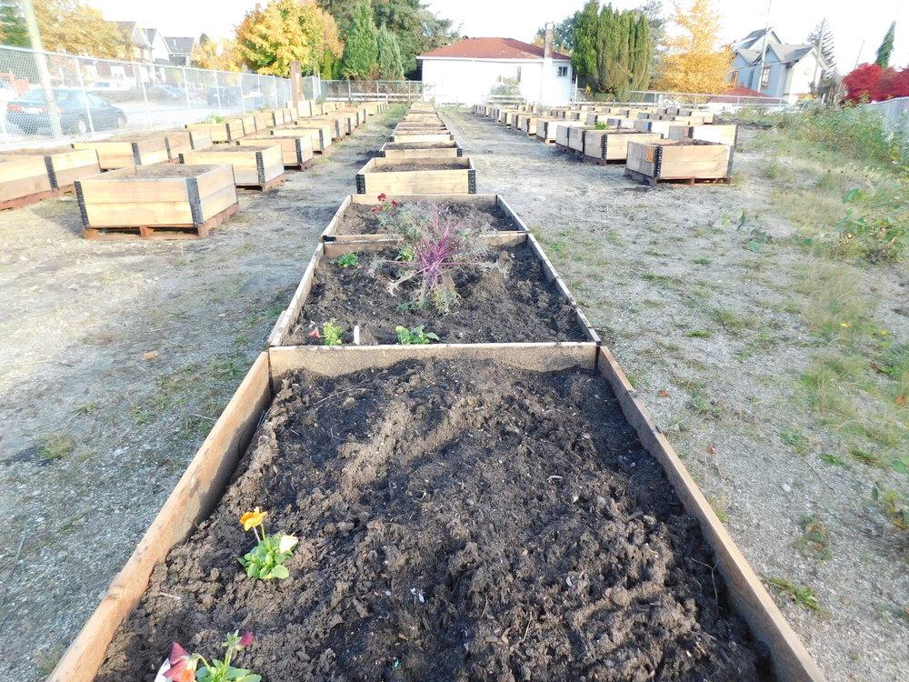 Victoria_Broadway_Vancouver_Community_Garden_Builders-0012.JPG