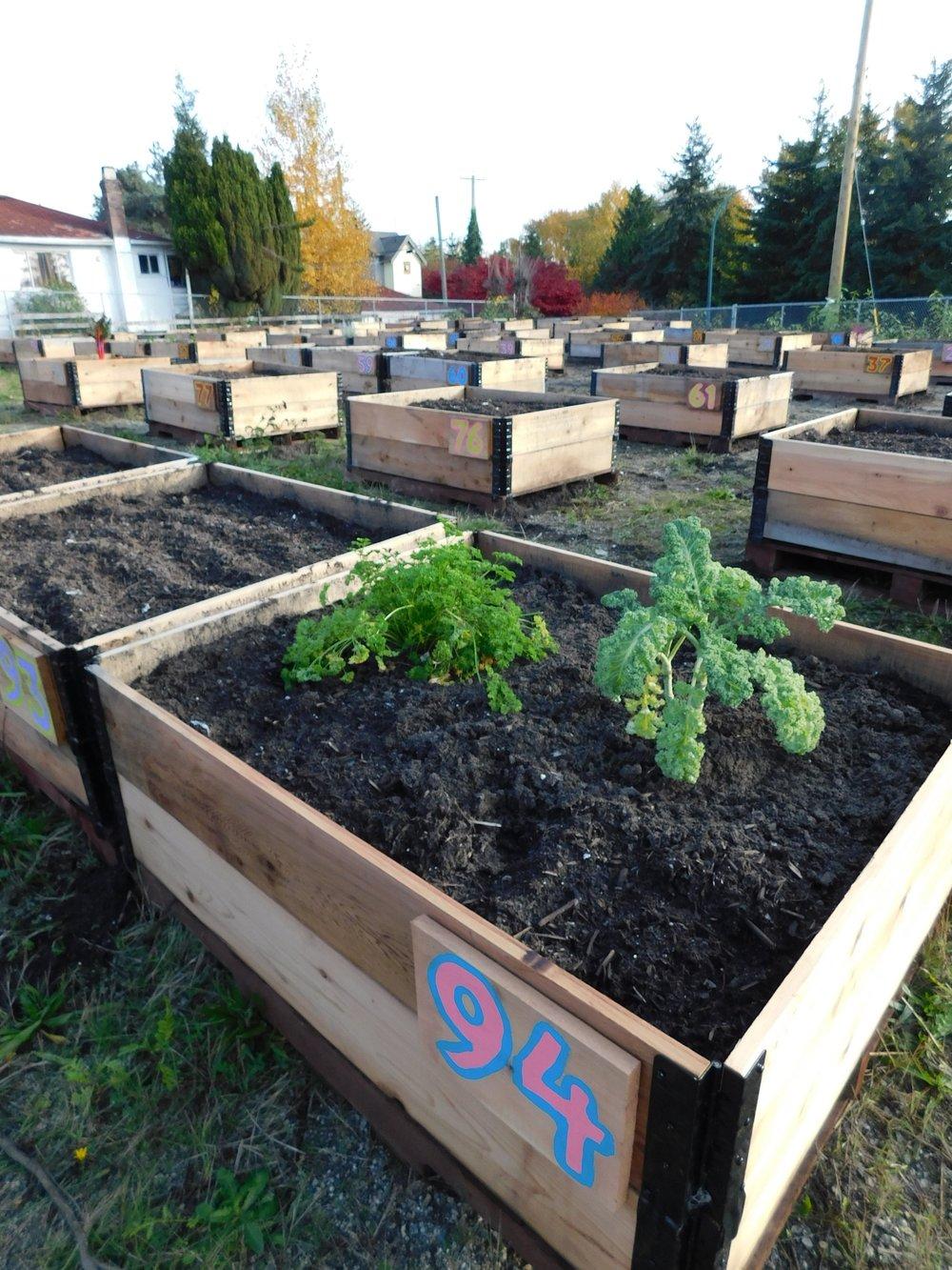 Victoria_Broadway_Vancouver_Community_Garden_Builders-0005.JPG