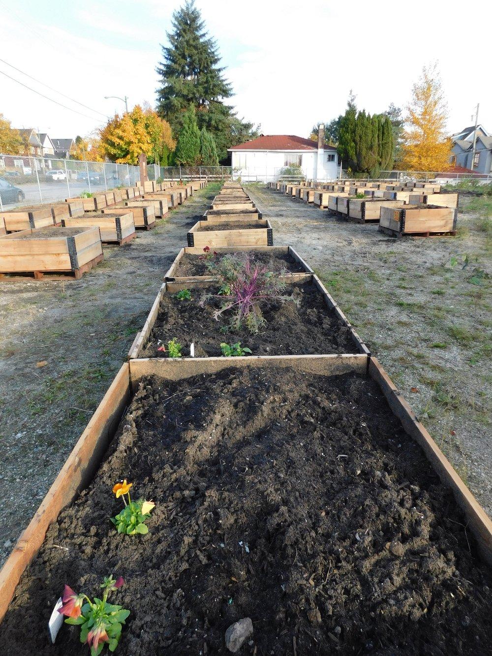 Victoria_Broadway_Vancouver_Community_Garden_Builders-0011.JPG