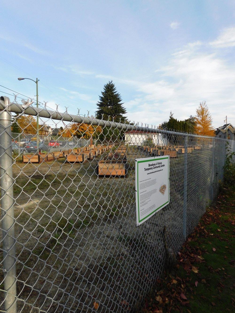 Victoria_Broadway_Vancouver_Community_Garden_Builders-0018.JPG